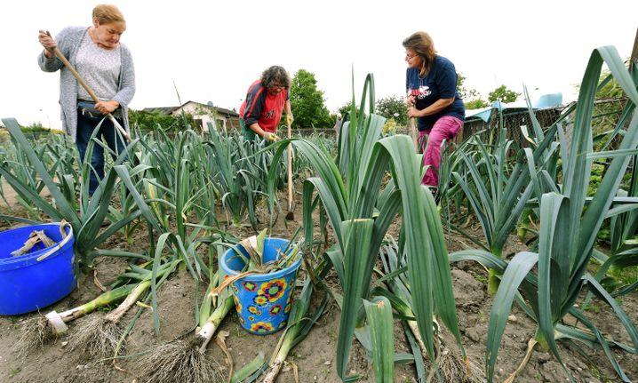 Hartz-IV-Empfänger als Arbeitnehmer im Gartenbau