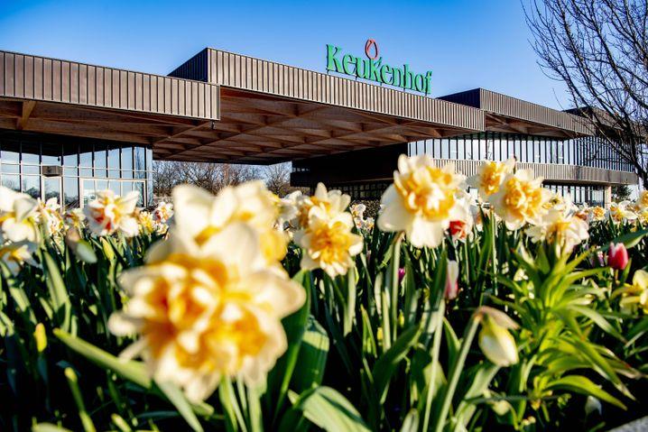 Rund 1,5 Millionen Besucher hat der Blumenpark Keukenhof in einer durchschnittlichen Saison
