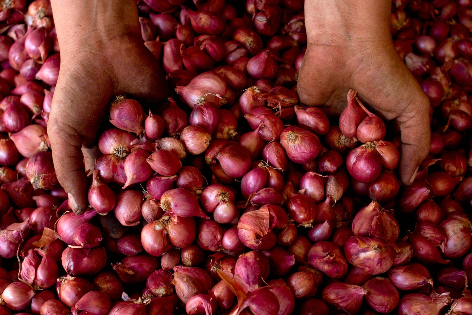 An onion seller dips her hands in a basket of onions as she poses for a photograph at Beringhardjo market in Yogyakarta