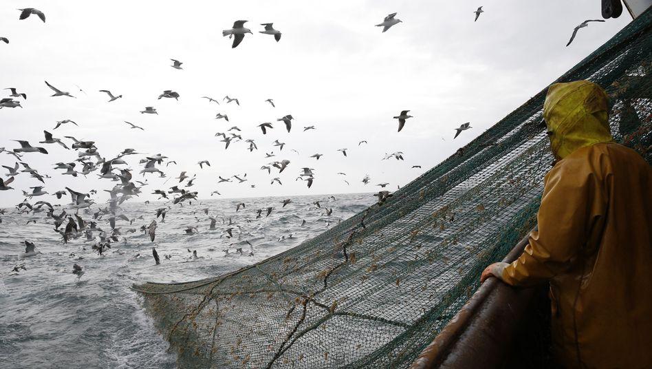 Fischer vor der Küste Nordfrankreichs (Archivbild)