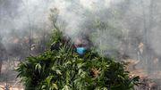 »Die Legalisierung von Marihuana ist nicht das Allheilmittel«