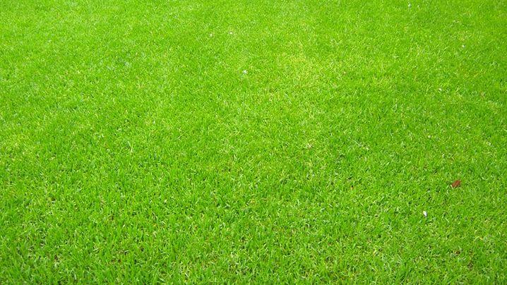 Rasenpflege: In den Gärten der Leser