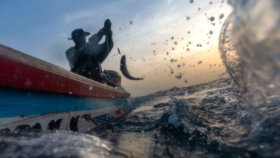 Fischer vor der Küste von Senegal (Archivfoto)