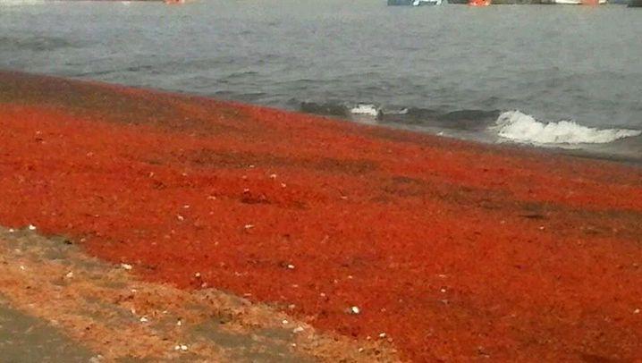 Mysteriöser Krebs-Tod: Unmengen Tiere landen an Chiles Küste