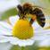 Biene Maja muss nicht sterben