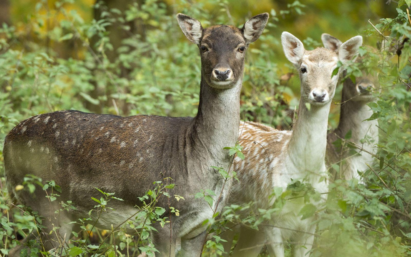 Wilderer muss im Gefängnis «Bambi» schauen