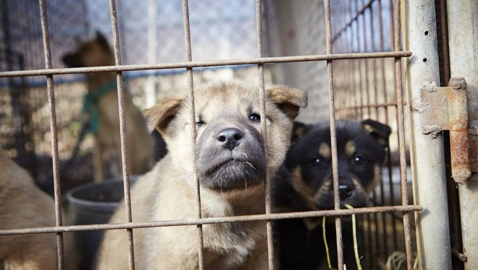 Hundefarm in Südkorea (Archiv)