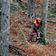 Illegaler Holzschlag in den letzten Urwäldern Europas