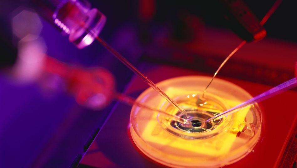 Auszeichnung 2014: Medizin-Nobelpreis geht an Entdecker des Orientierungssinns