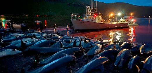 Färöer-Inseln: Hunderte Delfine getötet – neue Debatte über Walfang entfacht