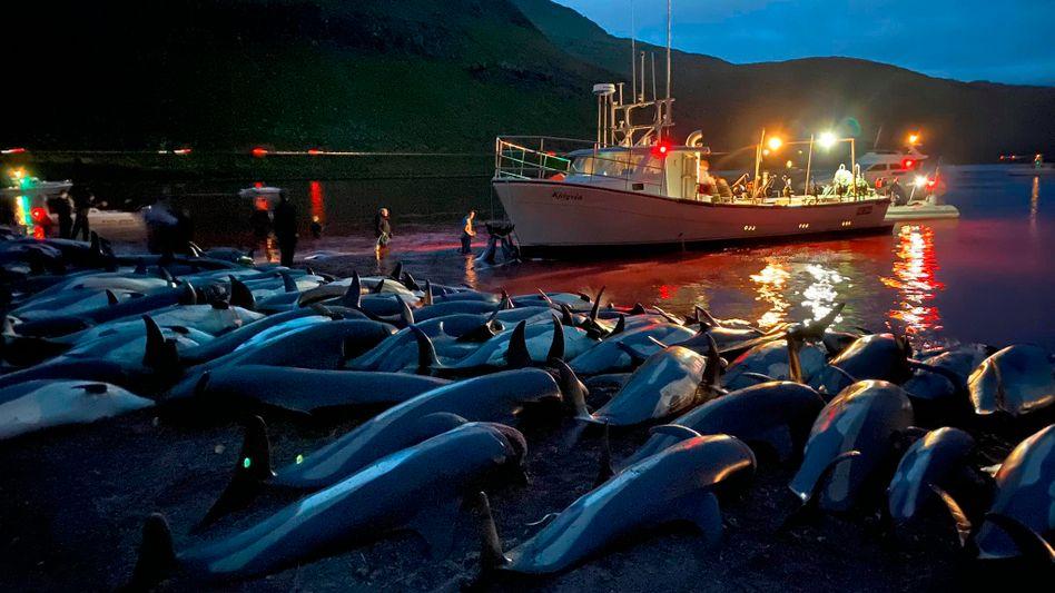 Getötete Delfine auf den Färöern: Dies ist eins der Fotos, die Sea Shepherd Conservation Society veröffentlichte