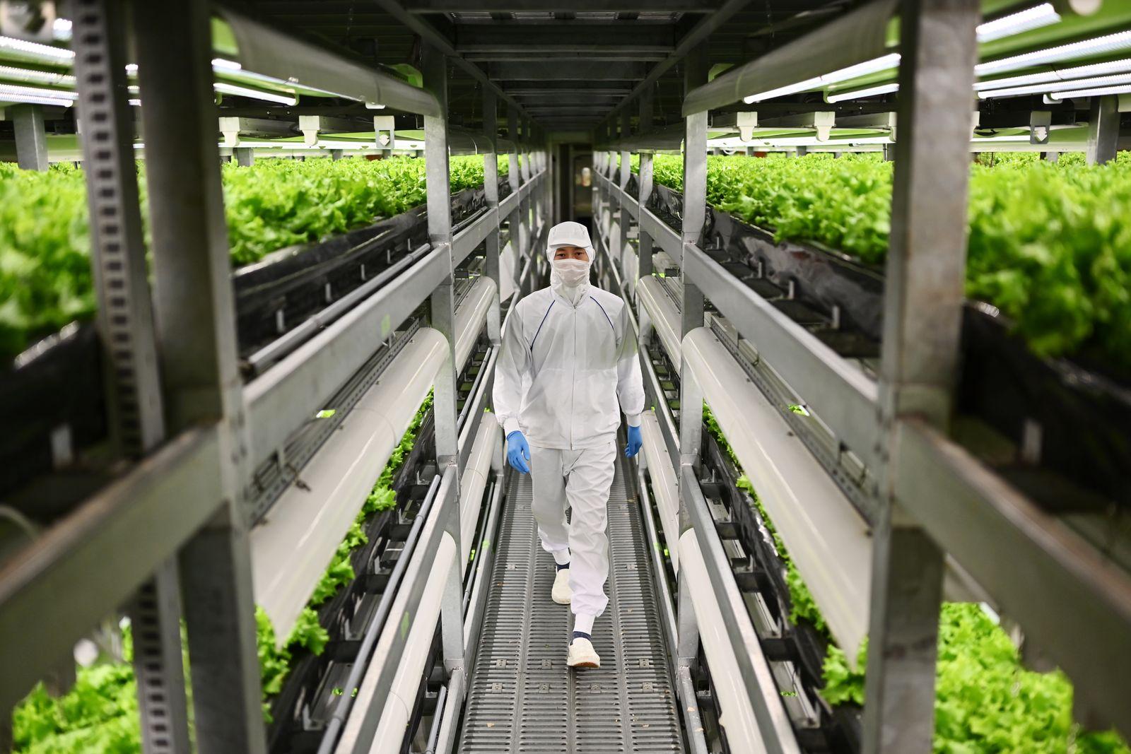 DOUNIAMAG-JAPAN-FARMING-AGRICULTURE-AGRONOMY