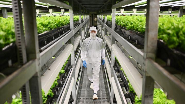 Intensive Landwirtschaft: Jede Farm ist eine Fabrik