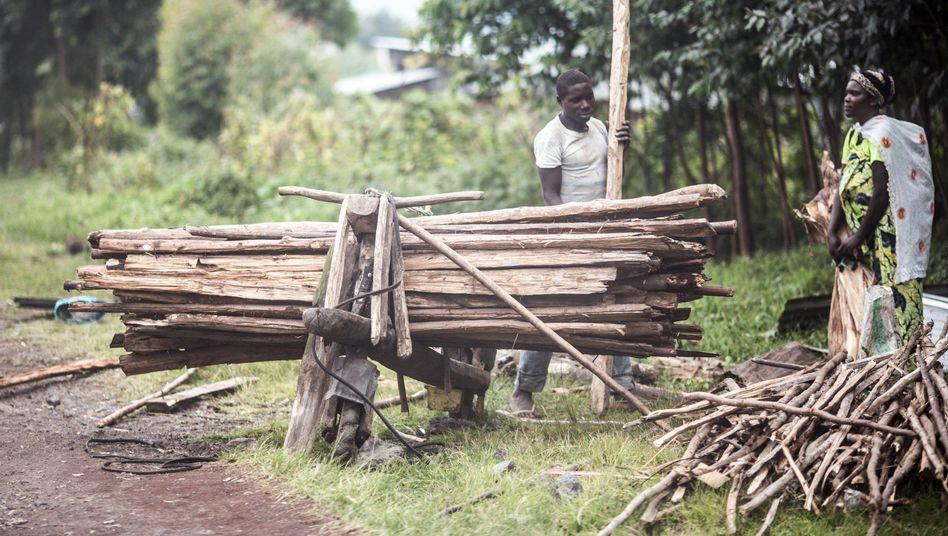Holztransport in der Demokratischen Republik Kongo: Neuer Wald soll entstehen