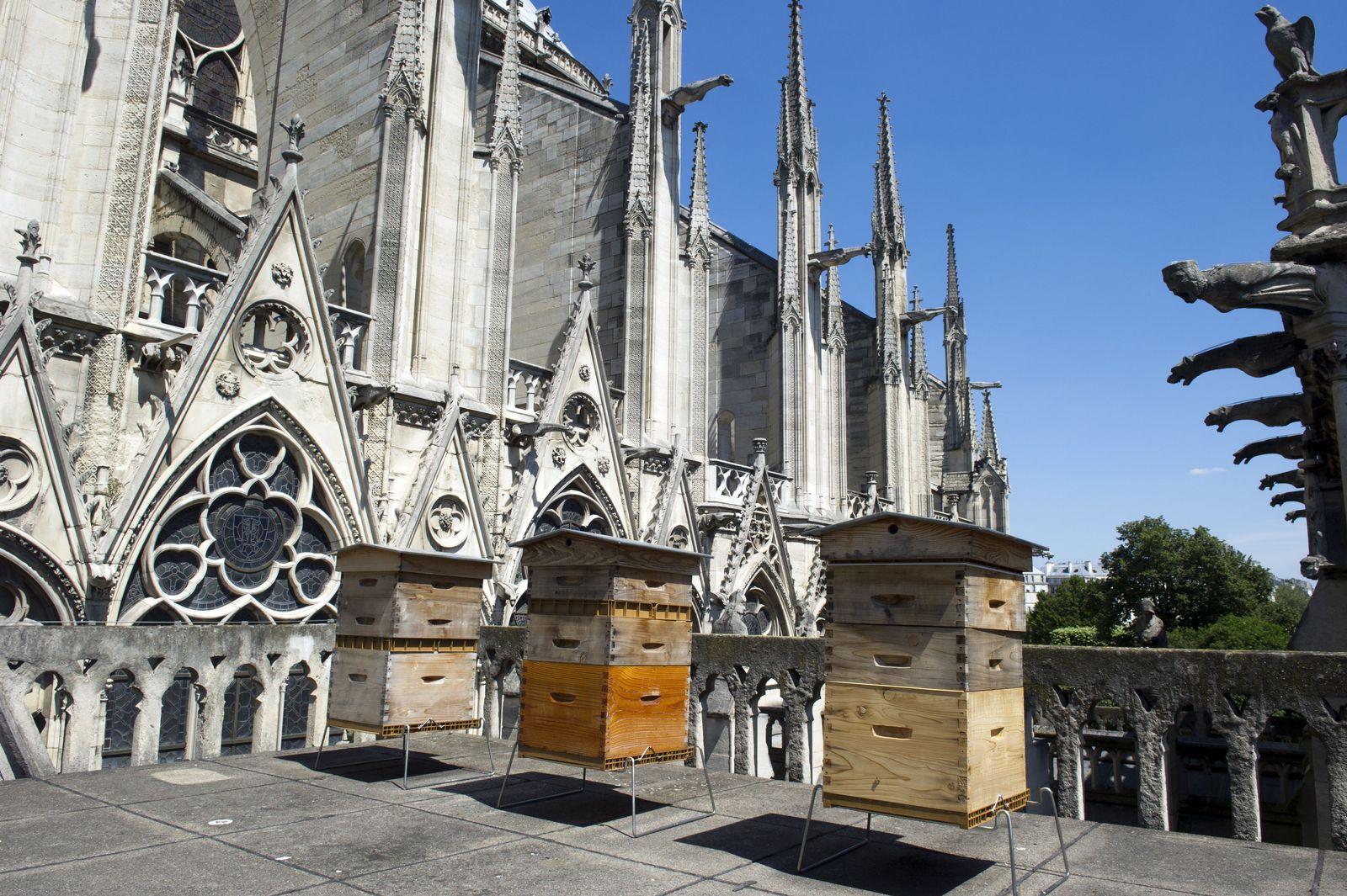 EINMALIGE VERWENDUNG Notre-Dame/ Bienen