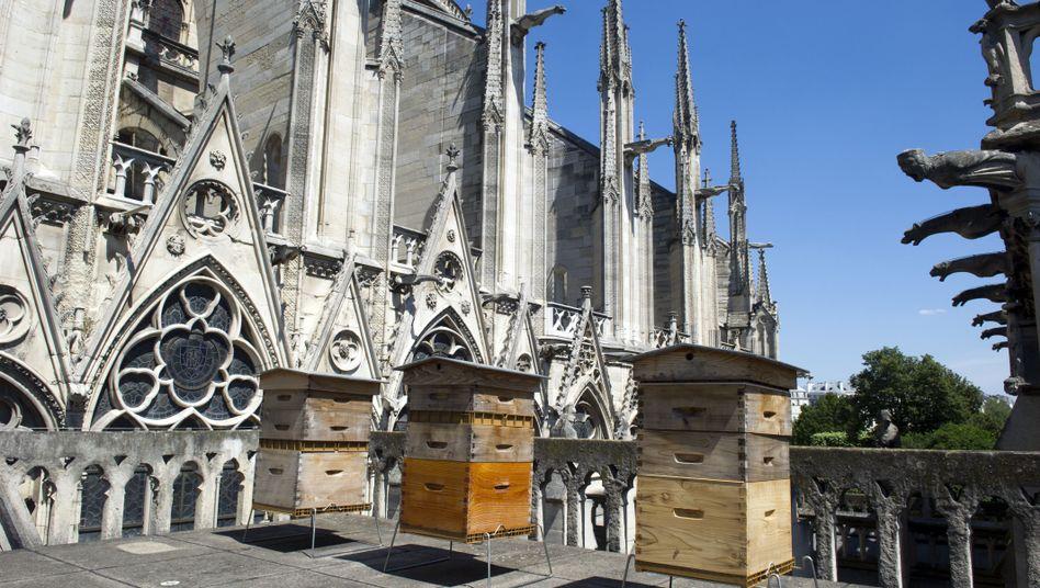 Bienenstöcke von Notre-Dame (Archivbild)