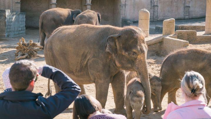 """Elefantenbabys: """"Mäuschen"""", """"Dickerchen"""", """"Kleine"""""""