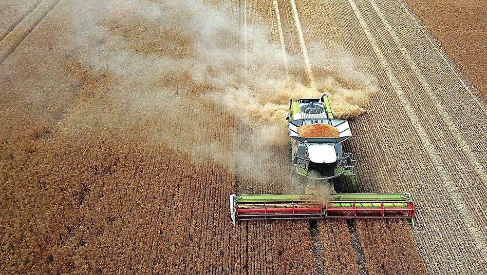 Mähdrescher auf Getreidefeld:Klimaschädliche Nutzung