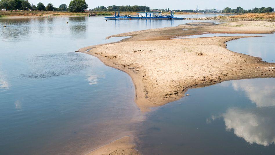 Trockengefallene Sandbänke in der Elbe