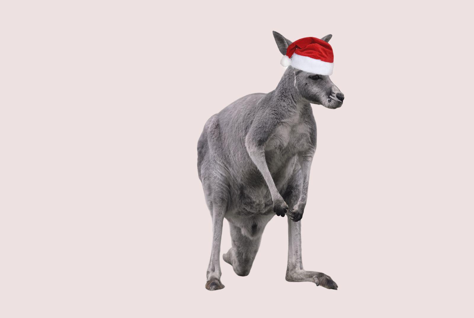EINMALIGE VERWENDUNG Weihnachtskänguru