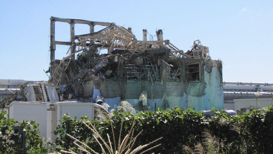 Zerstörtes AKW in Fukushima: Umfangreiche Tests in der Umgebung geplant