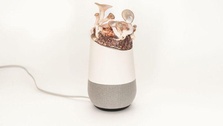 """Smarte Lautsprecher: """"Alias"""" soll Amazon Echo und Google Home unter Kontrolle halten"""