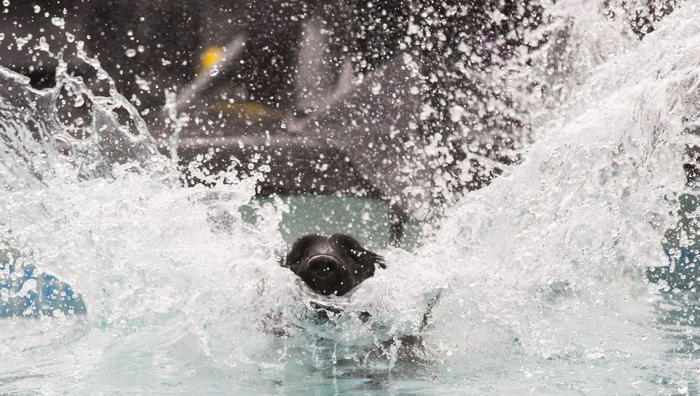 "Hunde-Messe: ""Dog Diving"" in Dortmund"