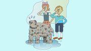Warum stinken nasse Hunde?