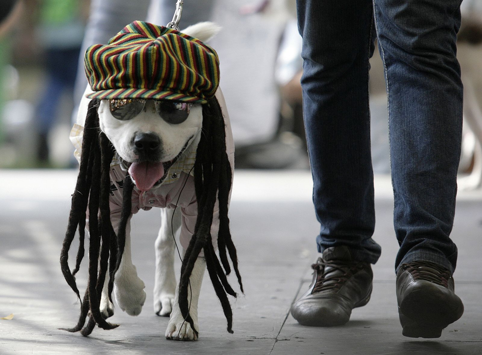 Haustier / Hund / Tieraccessoires