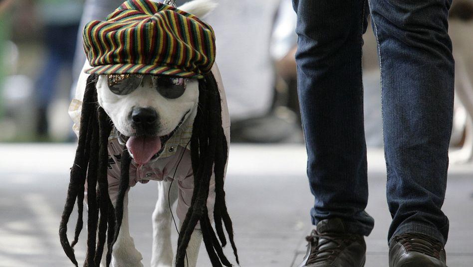 Hund im Rasta-Outfit: Mindestens sieben Charaktermerkmale unterscheiden sich