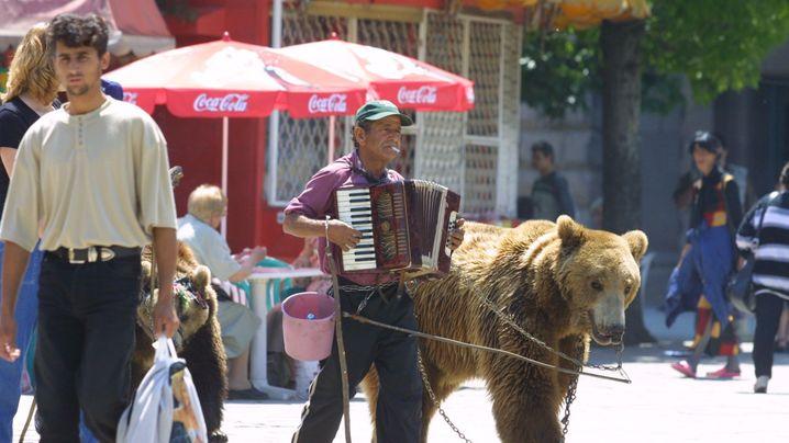 Tierquälerei: Das Leid der Tanzbären