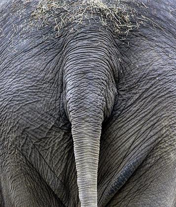 Elefantenschwanz: Ernährungshinweise im Haar