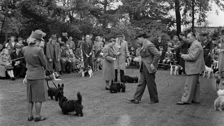 Hundeschau in England um 1940