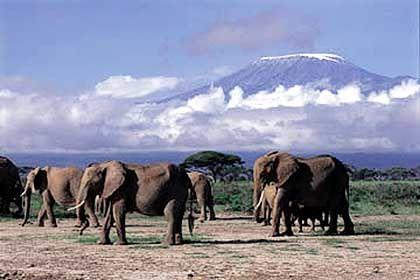Die größten Tiere vor dem höchsten Berg: Der Kilimandscharo