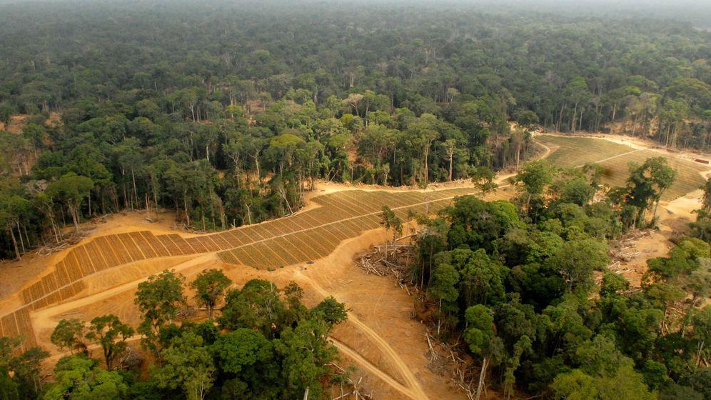 Loa loa: Tropenforscher wollen rätselhafte Wurmkrankheit erforschen