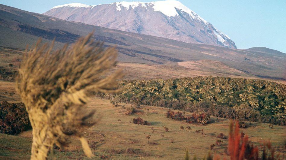 Kilimandscharo mit schneebedeckten Kibo-Gipfel: In 20 Jahren eis- und schneefrei