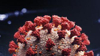 »Das Virus hat sich an den Menschen angepasst«