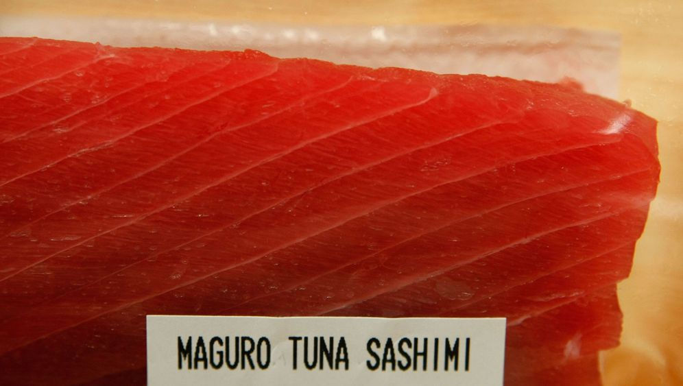 Überfischung: Gefahr für den Roten Thunfisch
