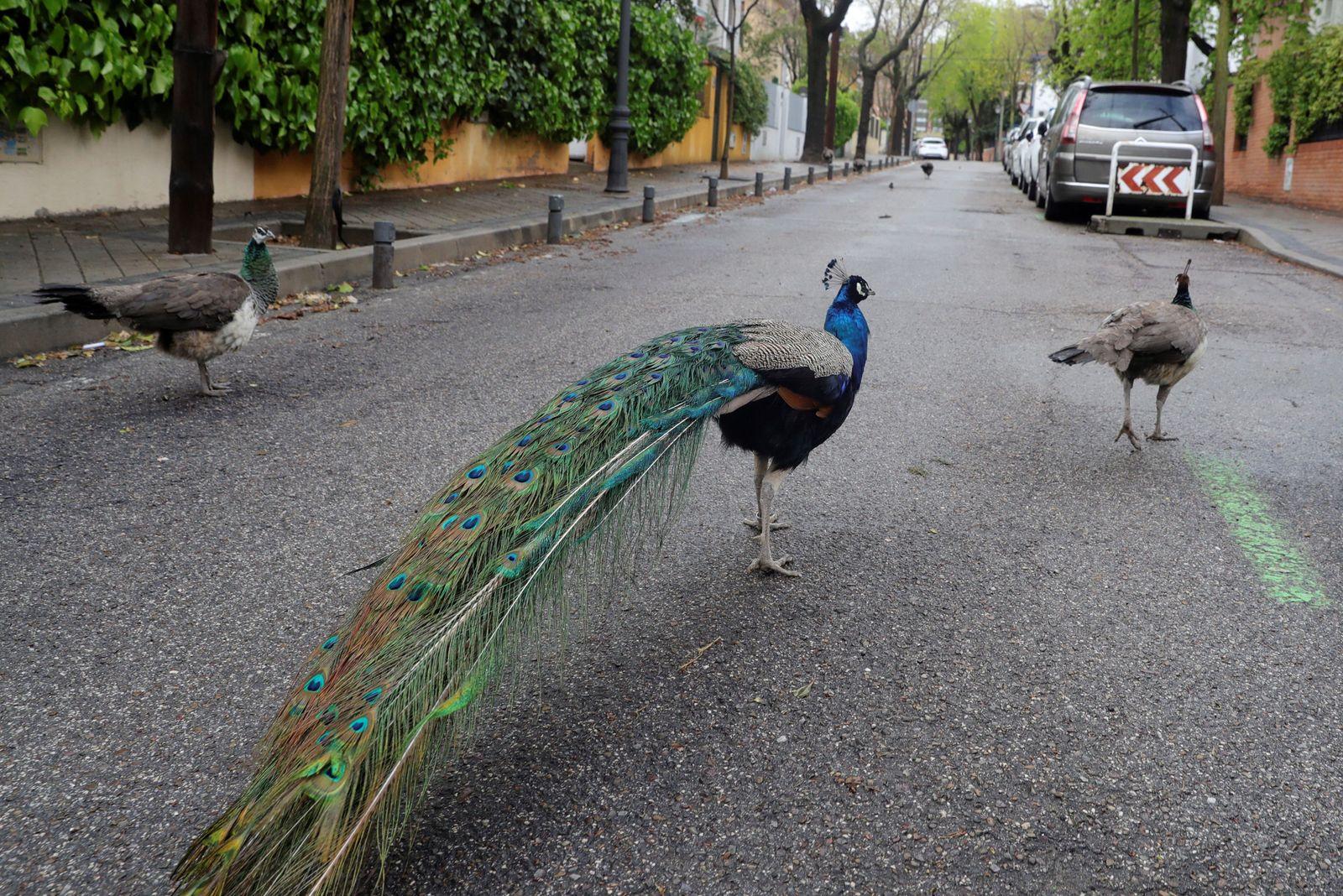Daily life amid coronavirus pandemic, in Madrid, Spain - 01 Apr 2020