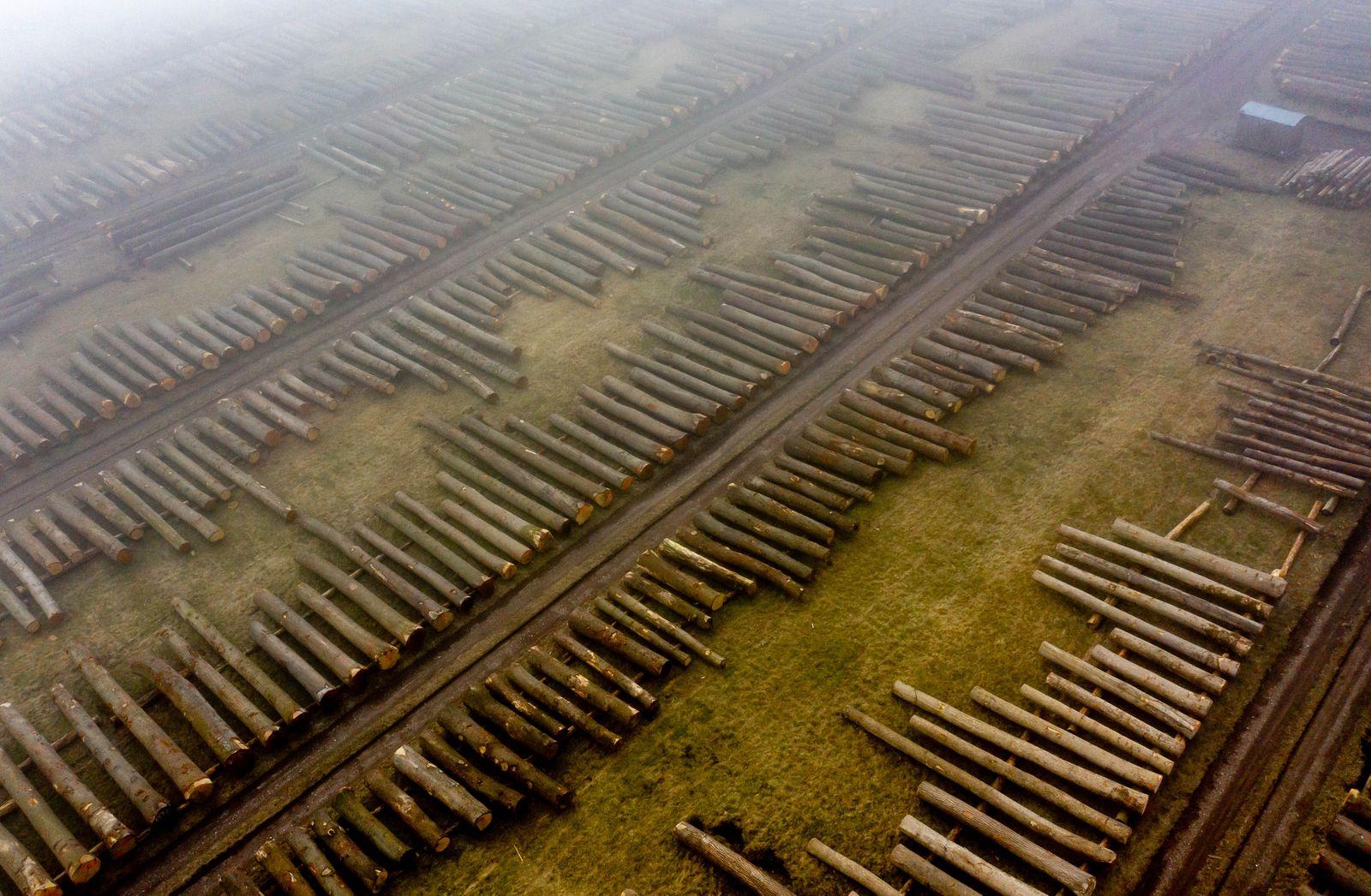 Wertholzversteigerung in Schleswig-Holstein
