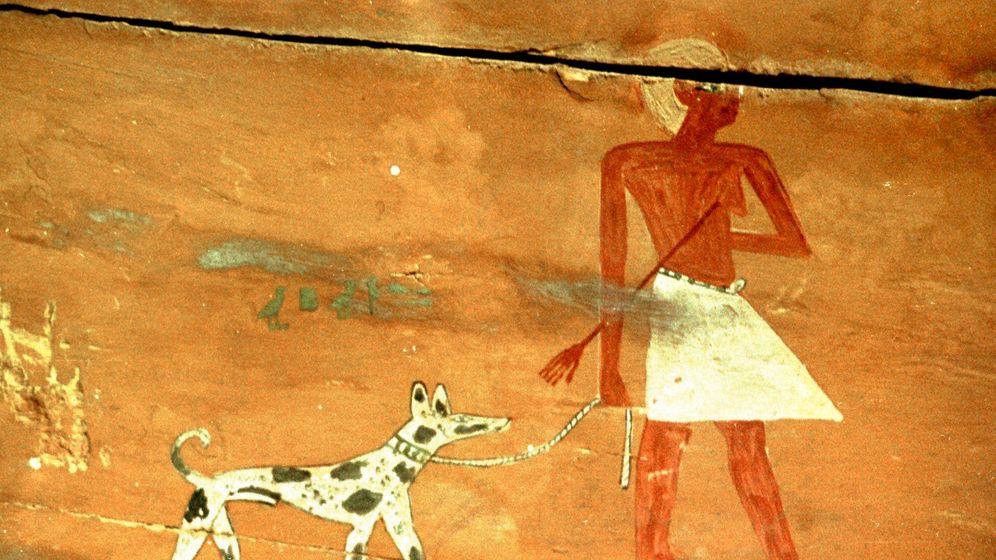 Photo Gallery: Egypt's Mummified Animals