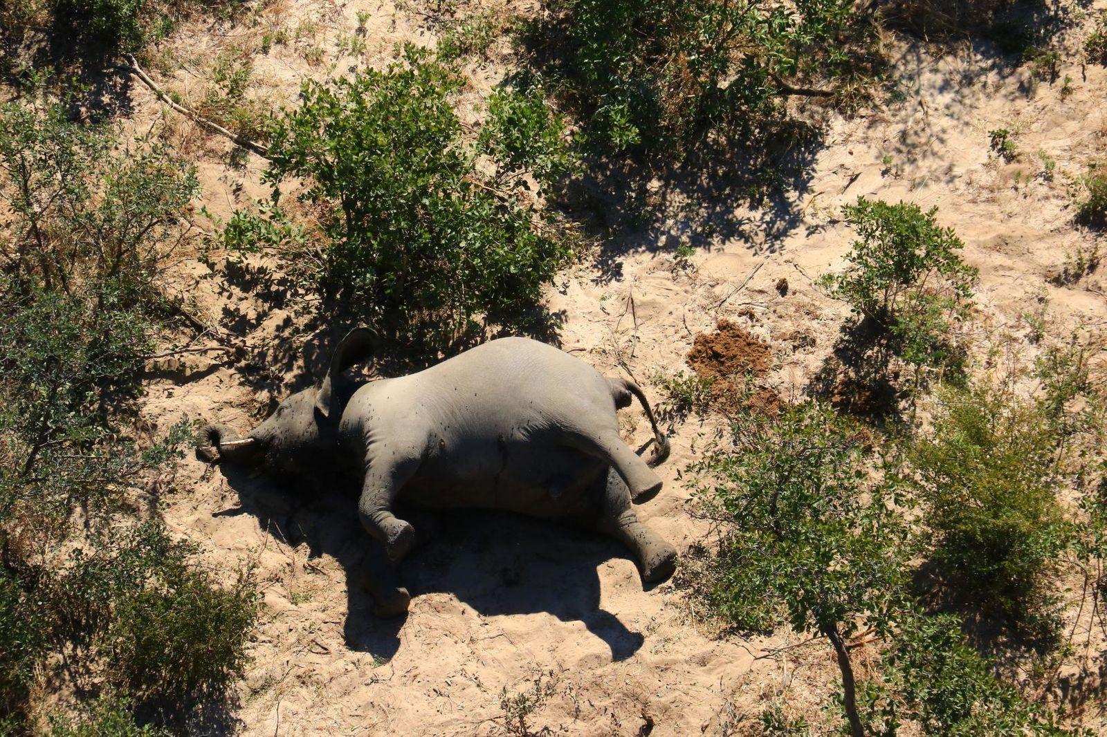 FILES-BOTSWANA-WILDLIFE-CONSERVATION