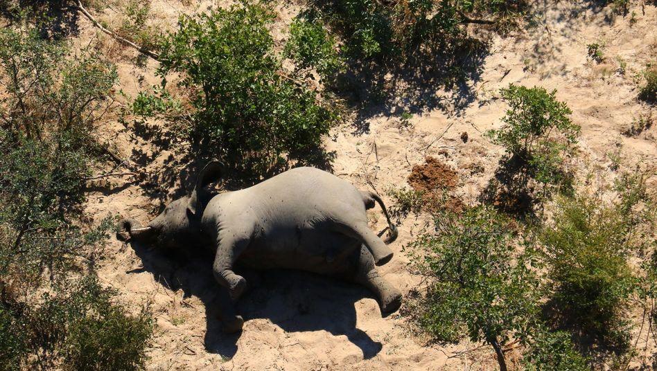 Toter Elefant im Okavango Delta in Botswana