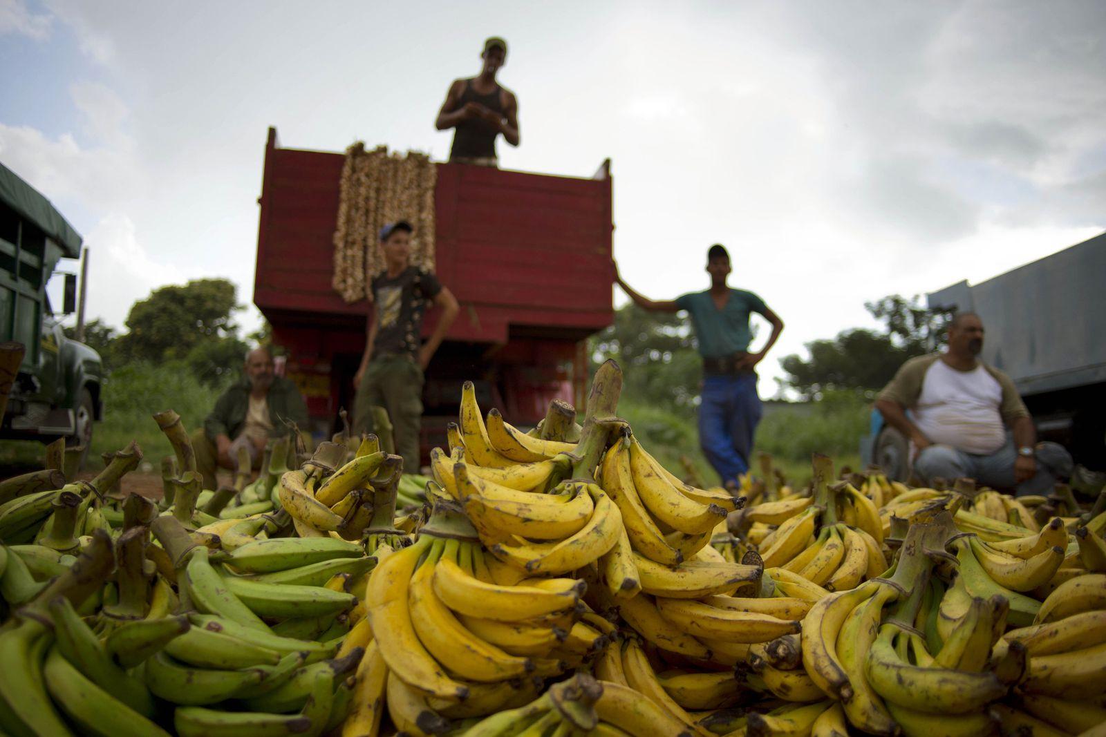 Bananen / Kuba