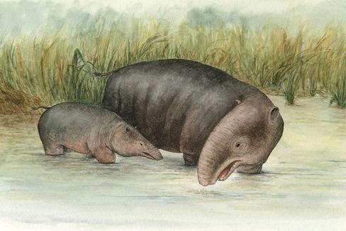 Elefanten-Ahn Moeritherium (Zeichnung): Groß wie ein Tapir, markante Oberlippe