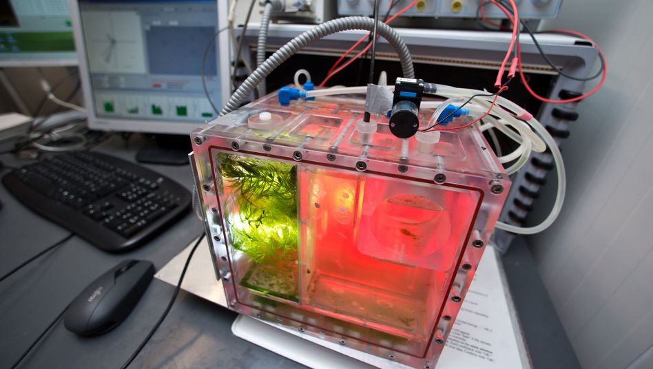 Aquarium mit Algen und Schnecken vor dem Start von Bion-M: Auch deutsche Unis beteiligt