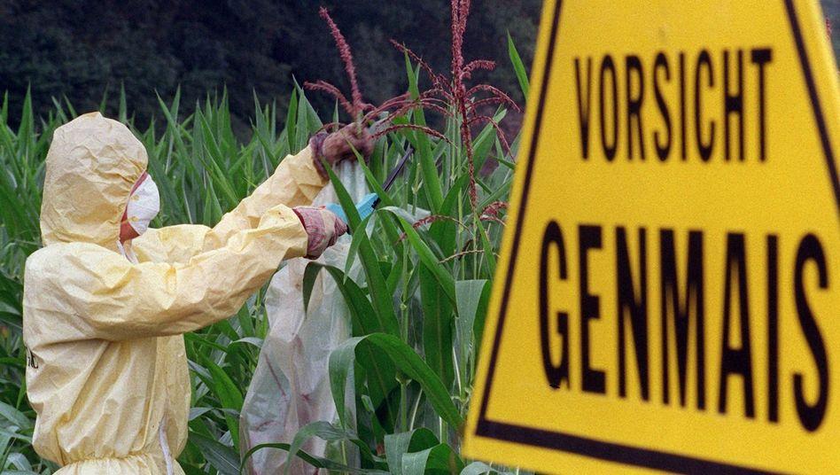 Protest gegen Genmais (Archivbild): Annahmen auf wackligen Füßen