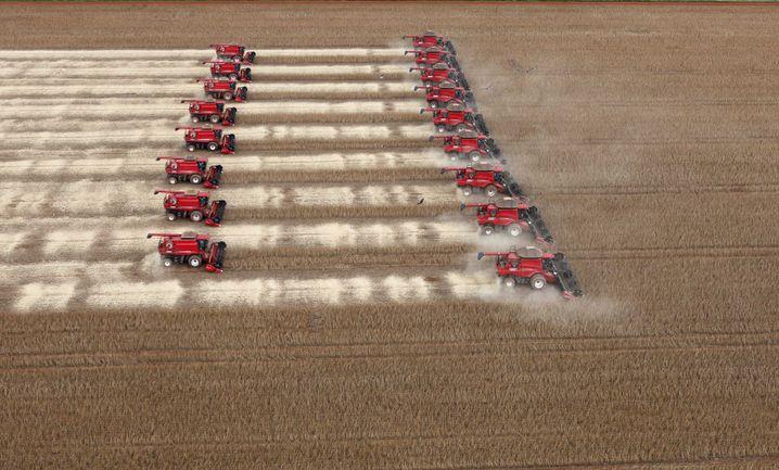 Sojabohnenernte in Brasilien (März 2012): Seit den Sechzigerjahren sind 500 Millionen Menschen verhungert