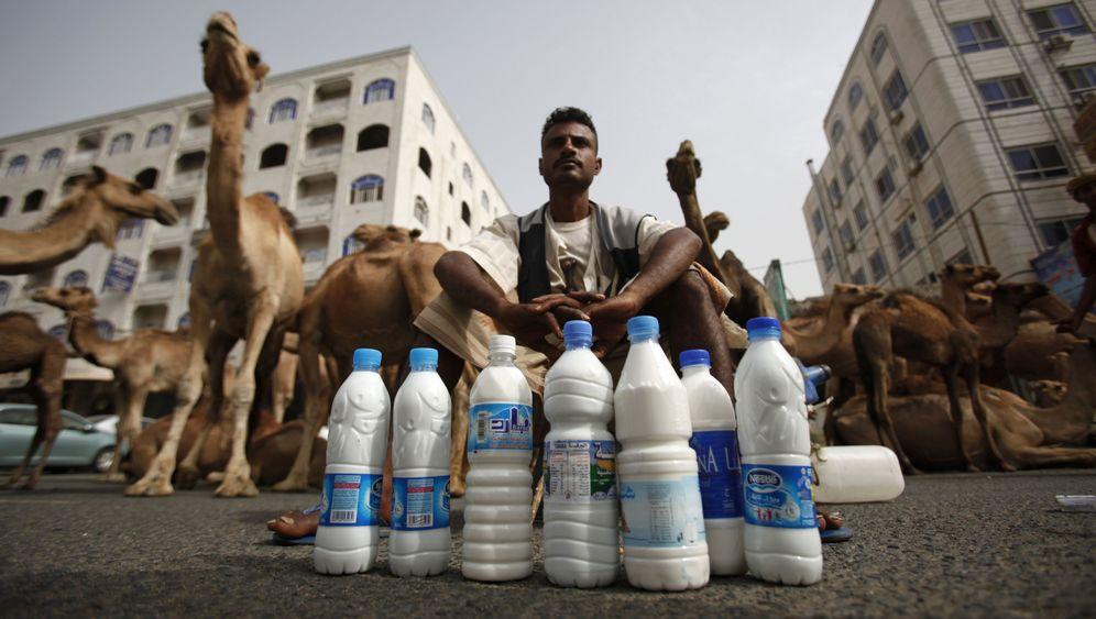 Kamelmilch: Der vermeintlich gesunde Beduinentrank