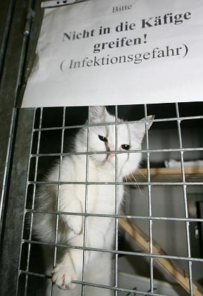 """Wieder Virus-frei: Eine der Katzen aus dem Grazer Tierheim """"Arche Noah"""""""